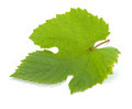 Grape Leaf Royalty Free Stock Photo - 25997245
