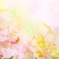 Beautiful Flower Is  In The Rays Of Light, Blured Royalty Free Stock Image - 26019006