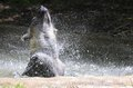 Hyena In Pool Stock Images - 26021534