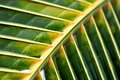 Palm Leaf Royalty Free Stock Photography - 26030847