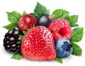 Collection Of Wild Berries With Leaves Royalty Free Stock Photo - 26041105