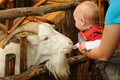 Little Child With Goat Royalty Free Stock Image - 26054546