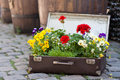 Flowers In Valise Royalty Free Stock Photos - 26063118