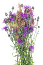 Thistle Wild Bunch Stock Images - 26072724