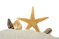Seashells And Starfish Royalty Free Stock Photo - 26076295