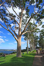 King S Park In Perth, Western Australia Royalty Free Stock Images - 26109469