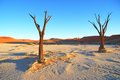 Dead Trees Stock Images - 26117044