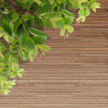 Old Grunge Wood Texture With Leaves Royalty Free Stock Photo - 26117625