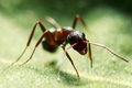 Ant Stock Images - 26129214