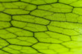 Close-up Of Andinum Fern Stock Photos - 26139223