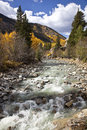 Aspens And Stream Royalty Free Stock Images - 26145109