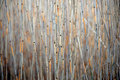 Dry Reeds Royalty Free Stock Photography - 26178247