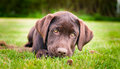 Puppy Royalty Free Stock Images - 26182679