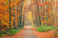 Pathway In The Autumn Forest Royalty Free Stock Images - 26191479