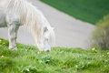 Portrait Of Farm Horse Animal Stock Images - 26204514