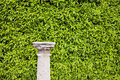 Hedge Background And Column Pedestal Royalty Free Stock Photo - 26206495
