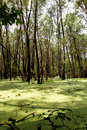 Swamp In The Green. Royalty Free Stock Photo - 26206505