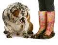Dirty Boots And Dirty Dog Royalty Free Stock Photos - 26209188