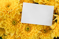 Chrysanthemum Bouquet With Copy Space Stock Image - 26237351