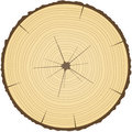 Tree Rings. Royalty Free Stock Images - 26254729