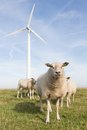 Windmill And Sheep In The Netherlands Stock Images - 26260694