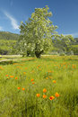 Lone Tree And Colorful Bouquet Of Spring Flowers Stock Photography - 26265332