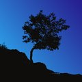 Tree Backgound Royalty Free Stock Images - 26270209