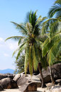 Beach  With Palm Trees Stock Photography - 26271172
