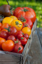 Tomatoes Royalty Free Stock Photography - 26291517