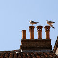 Seagulls On The Roof Stock Photo - 26300880