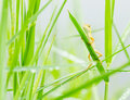Small Lizard Hiding On Fresh Leaves  Green Grass Stock Photos - 26308293