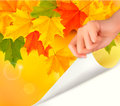 Autumn Background With Yellow Leaves And Hand Royalty Free Stock Photo - 26327045
