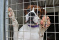Dog In A Cage Royalty Free Stock Photos - 26331658