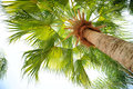 Palm Tree View From Below Stock Photo - 26335530