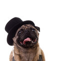 Funny Dog Wearing A Top Hat Stock Photo - 26348650