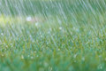 Rain Is Falling On Fresh Green Grass Royalty Free Stock Images - 26359729