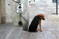 A Dog With The No Dogs Allowed Sign Royalty Free Stock Photography - 26377357