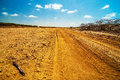 A Dirt Road In The Desert Stock Photo - 26389390