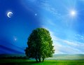 Day And Night Tree Royalty Free Stock Image - 26398266