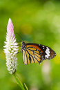 Butterfly On Flower Stock Images - 26401554