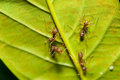 Ants Royalty Free Stock Image - 26428796