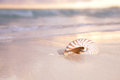 Golden Sunrise And Nautilus Shell In The Sea Stock Image - 26435911