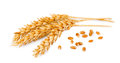 Wheat With Grains Stock Image - 26436041