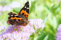 Butterfly Royalty Free Stock Images - 26438579