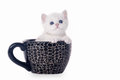 Small Silver British Kitten In Cup Stock Photos - 26450483