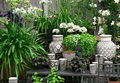 Beautiful Plants And Ceramics In A Flower Shop Royalty Free Stock Photos - 26450928