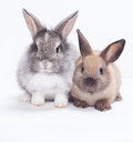 Two Rabbits Royalty Free Stock Images - 26454289