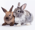 Two Rabbits Stock Images - 26455524