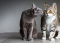 Two Cats Royalty Free Stock Image - 26469116