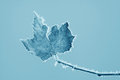 Leaves With Frost In Winter Stock Image - 26506591